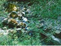 sharps-creek